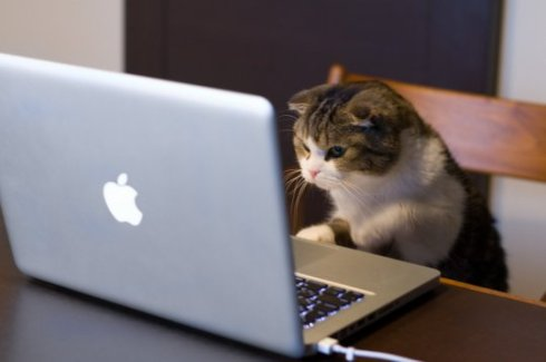 MacbookCat